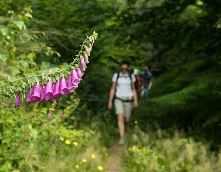 Randonnée Vosges - Circuit de randonnée Epinal - sentier pédestre Epinal