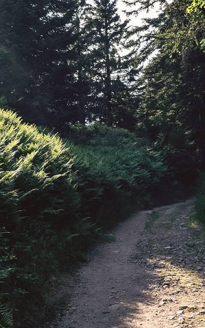 Randonnée Epinal - Forêt vosgienne - Guide de randonnée