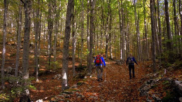 Marche nordique Vosges