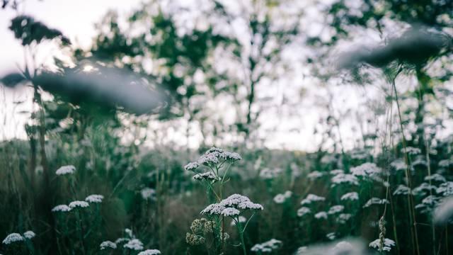 Campagne - Epinal - Fleurs