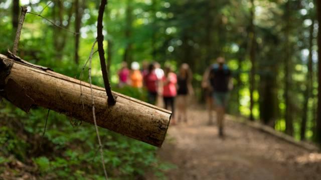 Randonnée en forêt - Epinal