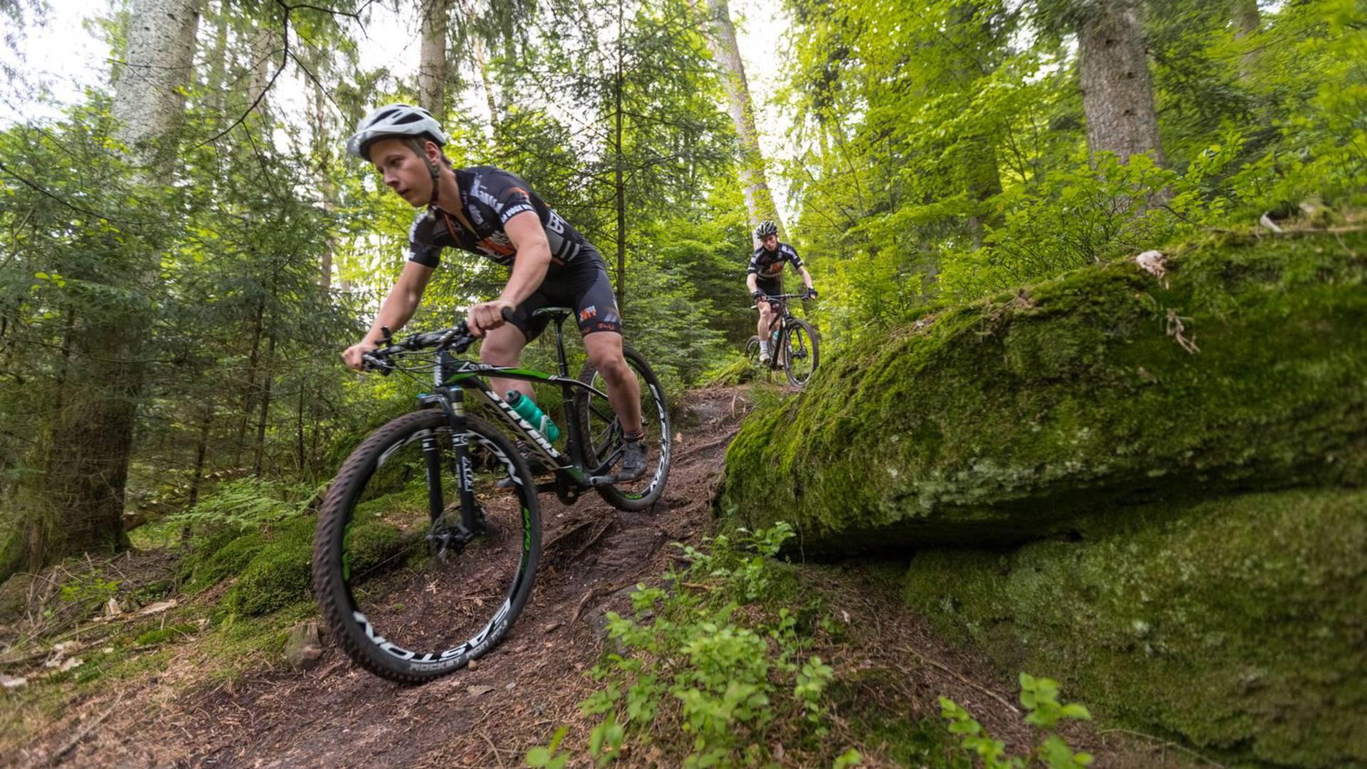 Descente de VTT - VTT Epinal - Vélo en forêt