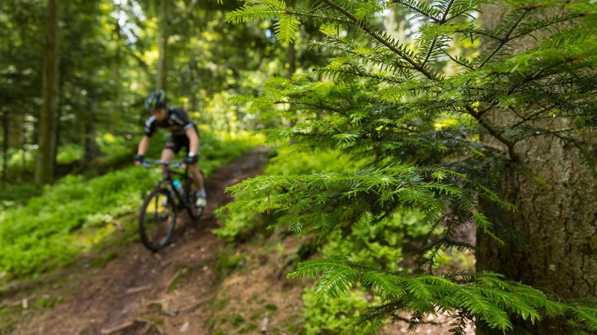 VTT Epinal -Vélo de descente - Circuits VTT Vosges - Clubs VTT Epinal
