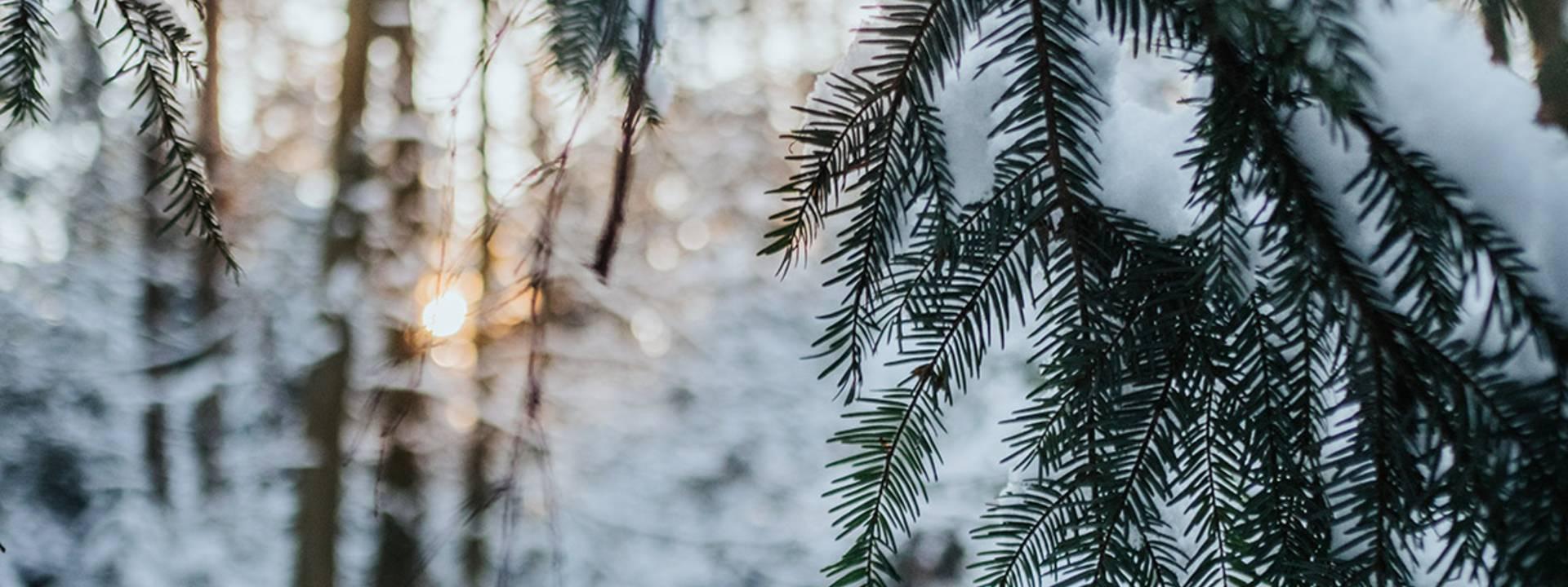 Randonnée Vosges - Randonnée en hiver - Sortie raquette - Circuit de randonnée