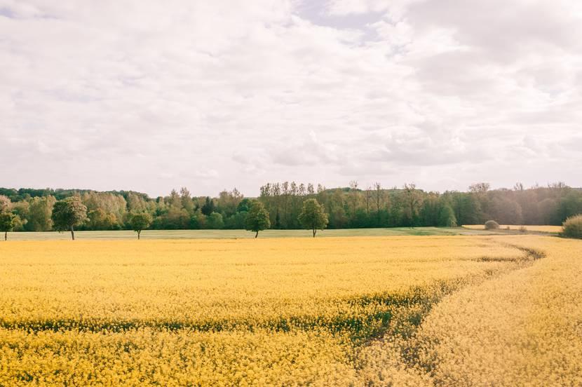 Plaine des Vosges - Epinal