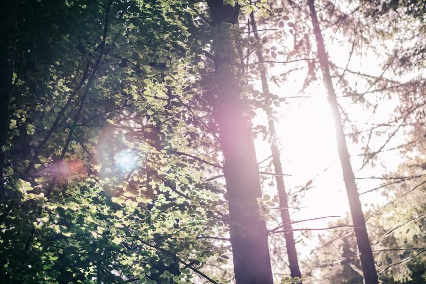 Forêt vosgienne - randonnée Vosges - randonnée Xertigny - Randonnée la Vôge les Bains