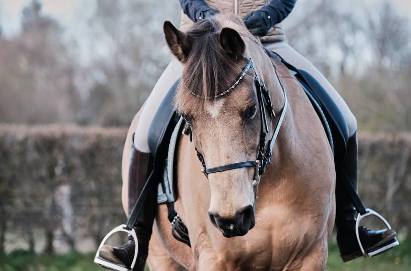 Balade à cheval dans les Vosges - Equitation - Centre équestre Epinal