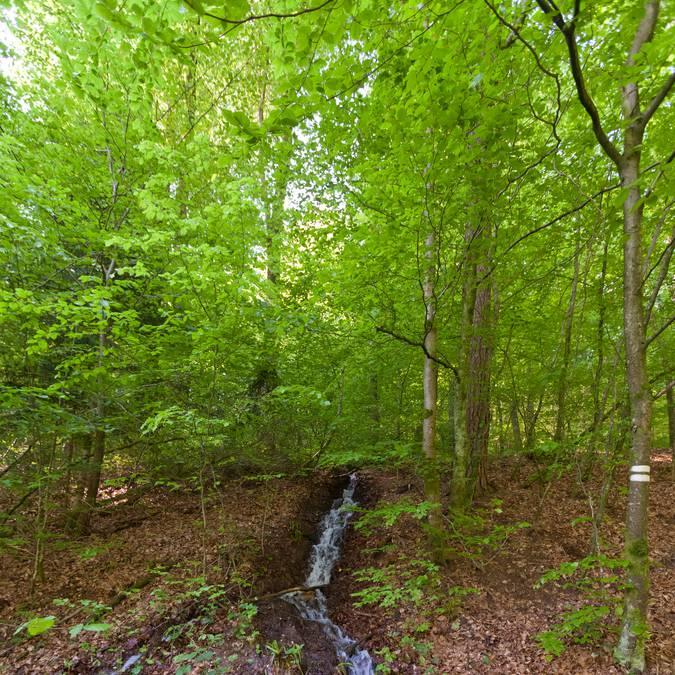 Ruisseau en forêt - Randonnée la Vôge-les-Bains