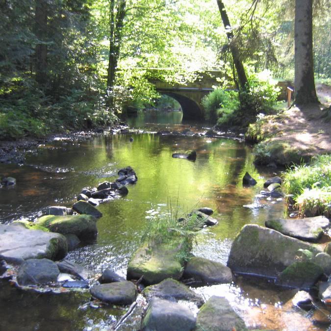 Cours d'eau dans les forêts vosgiennes