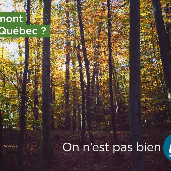 Vermont ou Québec ?