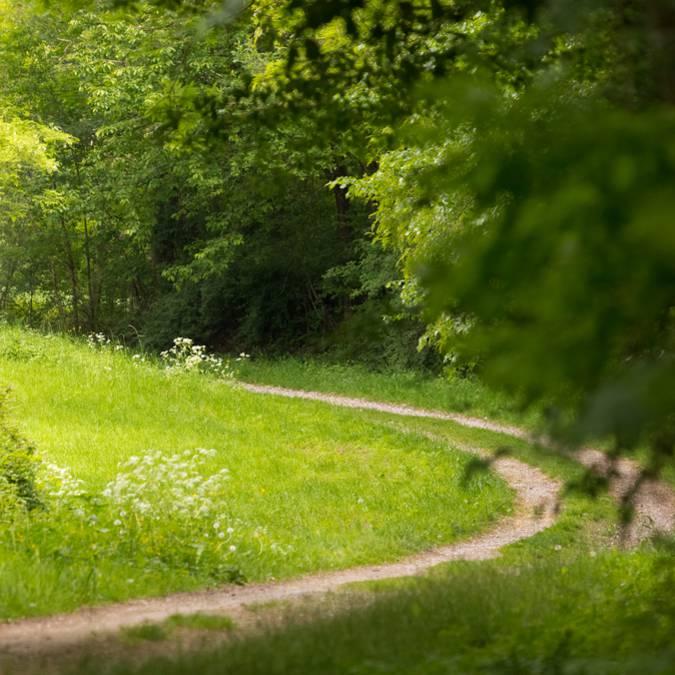 Randonnée à cheval - Balade à cheval Vosges - Itinérance à cheval - Paysage